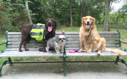 Things To Do With Your Dog This Autumn
