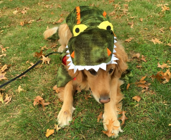 Celebrating Halloween with your dog