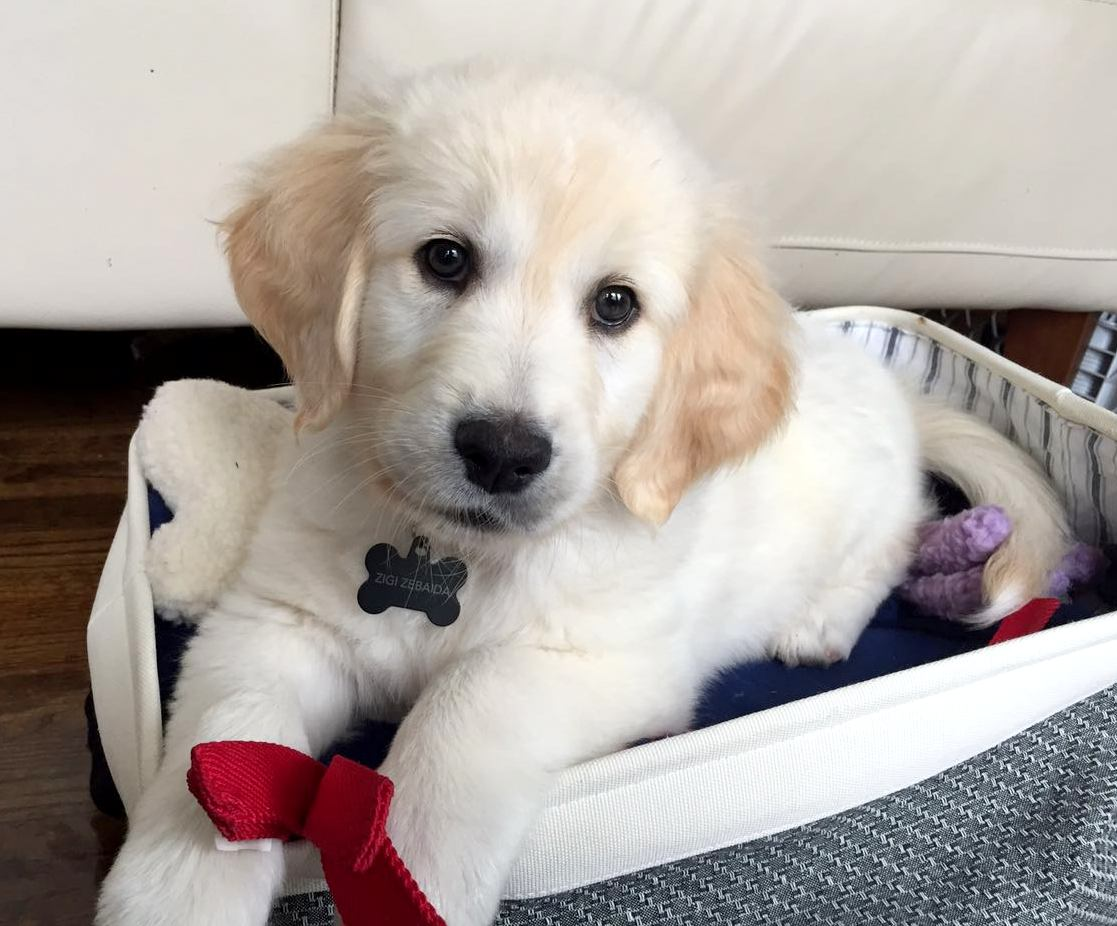 tips to take care of your puppies