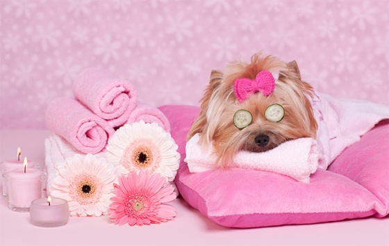 Spa vacations for you and your pet