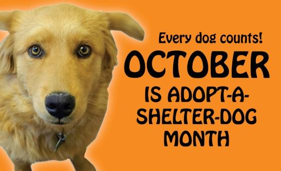 OCTOBER: ADOPT A DOG