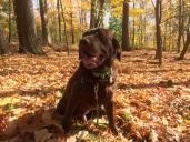 Why fall can be irresistible for dogs