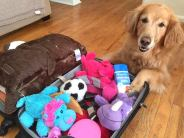 Happy Dog Paws. Travelling with pets