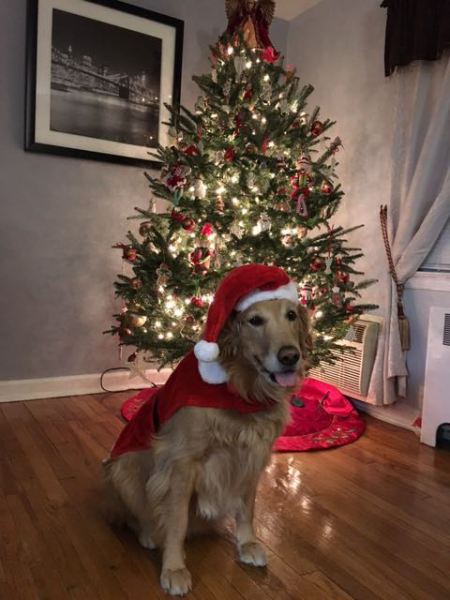 8 Tips For Happy Holidays With Your Dog Happy Dog Paws
